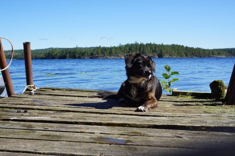 Zweedse natuur gaat nooit vervelen